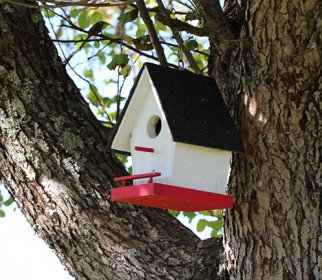 024Bird_House_1_of_many_on_property